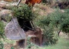 مستوطنون يقطعون مائة شجرة زيتون ويسرقون ثمار أخرى في جالود