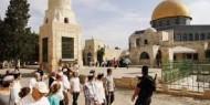 65 مستوطنا يقتحمون الأقصى والاحتلال يعتقل مقدسيين