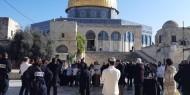 143 مستوطنا يقتحمون الأقصى بحماية شرطة الاحتلال