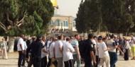 155 مستوطنا بينهم عناصر من مخابرات الاحتلال يقتحمون الأقصى