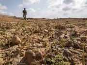 الصومال: الاستعداد لمواجهة الجراد خوفًا من المجاعة